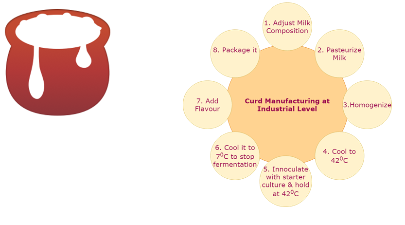 Curd Manufacturing Process